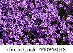 Background Of Purple Flowers...