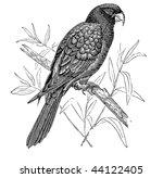 drawing parrot | Shutterstock . vector #44122405