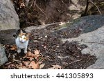 Stock photo photo of three color cat wandering at central park new york 441305893