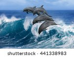 four beautiful dolphins jumping ... | Shutterstock . vector #441338983