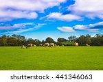 Australian Agricultural Farm...
