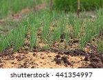 sufficient economy   vegetable... | Shutterstock . vector #441354997