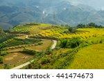 Beautiful Rice Paddy Fields...
