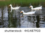 Three Ducks Are Swimming In Th...