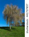 Small photo of Tree, Alamo Square, San Francisco, California, USA