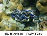 Underwater Marine Bivalve...