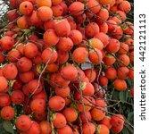 Small photo of Fresh foxtail palm fruit Wodyetia bifurcate, Ripe areca nut palm or betel nut on tree.