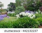 Wild Garden Panorama Of White...