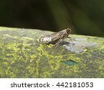 Small photo of night shot of a planthopper,Delphacidae