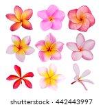 set of frangipani flowers... | Shutterstock . vector #442443997