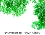 abstract beauty leaves and... | Shutterstock . vector #442472593