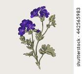 Geranium Meadow  Illustration...