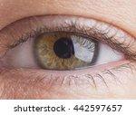 Green Eye Very Closer