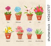 vintage collection of planted... | Shutterstock .eps vector #442613737
