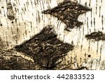 the bark of old birch tree... | Shutterstock . vector #442833523