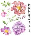 Watercolor Illustration Flower...