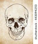 hand drawn line art... | Shutterstock .eps vector #443094253