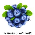isolated blueberries. fresh... | Shutterstock . vector #443114497