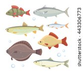 set fish isolated. river fishes ... | Shutterstock .eps vector #443306773