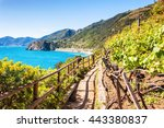 beautiful view of the vineyards ... | Shutterstock . vector #443380837