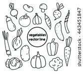 vegetables line art. cabbage ... | Shutterstock .eps vector #443451847