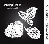 sketched fruit illustration of... | Shutterstock .eps vector #443545177