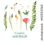 set flowers. summer grass.... | Shutterstock . vector #443552563