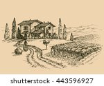 vineyard drawing. traditional... | Shutterstock .eps vector #443596927