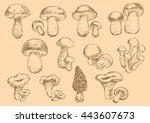 edible mushrooms with fresh... | Shutterstock .eps vector #443607673