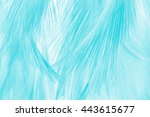 blur feather luxurious... | Shutterstock . vector #443615677