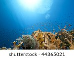 ocean  coral and fish | Shutterstock . vector #44365021