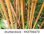 Bamboo Stems Background. Green...