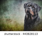 Drawing Of The Dog Rottweiler ...
