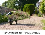 Wheelbarrow And Plants In...