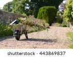 Wheelbarrow And Plants In...