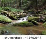 Small Forested Stream In...
