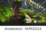 nano aquarium | Shutterstock . vector #443932213