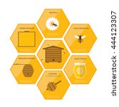 honey infographics . flat... | Shutterstock .eps vector #444123307