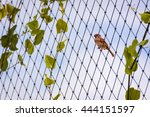 Sparrow On The Wire Fence With...