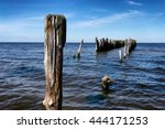 Battered Wooden Piles Of The...