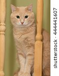 Small photo of Auburn good cat with long whiskers named Perseus