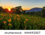 Sunset Rays With Wildflowers O...