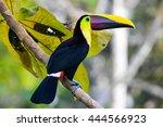 chestnut mandibled toucan found ... | Shutterstock . vector #444566923