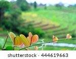 beautiful leave heart shaped... | Shutterstock . vector #444619663