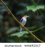 colorful bird silver breasted... | Shutterstock . vector #444692317