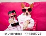 Chihuahua Dog Relaxing At Spa...