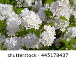 White Flowers On A Bush ...