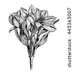 hand drawn alstroemeria... | Shutterstock .eps vector #445365007