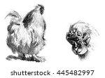 cock race  vintage engraved...   Shutterstock . vector #445482997
