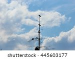Five Black Crows Perched On Th...